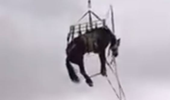 Jomboy — Horse rescued by a helicopter…