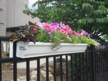Apartment - Condo Gardening Gutter Gardens