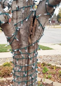 A split tree trunk. Things a homeowner needs to know tips gutter cleaning wichita gutter king wichita
