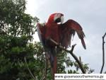 Lethem - Linden Trail - Scenes - Macaw