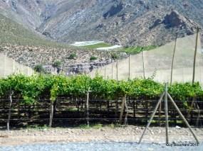 La merveilleuse Vallée d'Elqui (capteurs d'humidité pour la vigne)