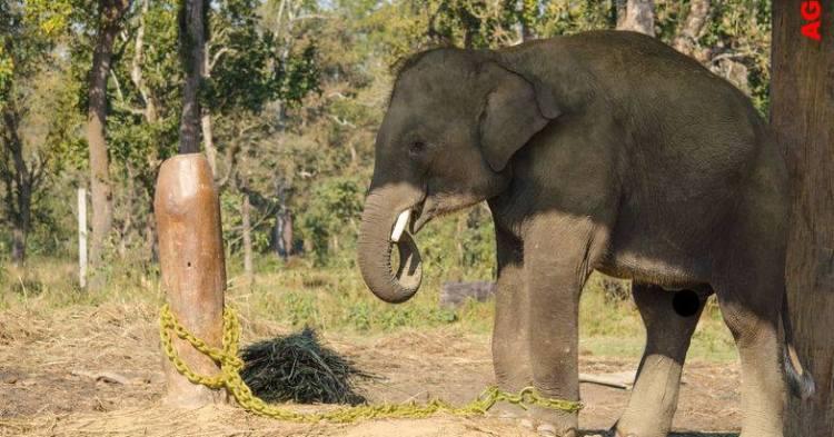 elephanteau-enchaine-arbre