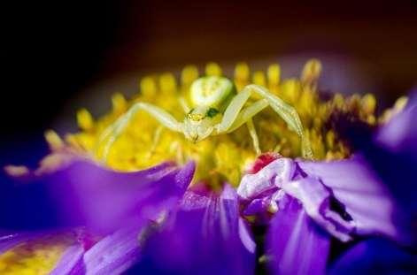 scorpio symbol spider