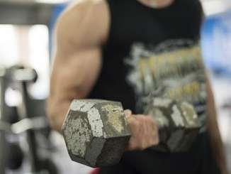 muscle building factors