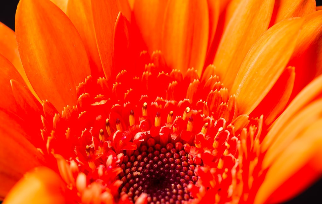 Floral Photography – Macro Style