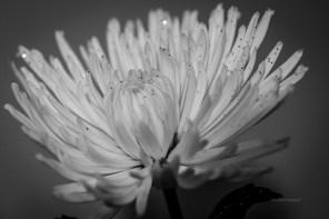 Floral - Macro