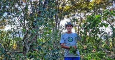Cosechando éxitos a través de la yerba mate orgánica