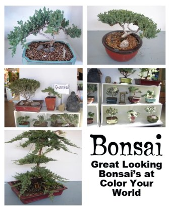How to make Bonsai Plants