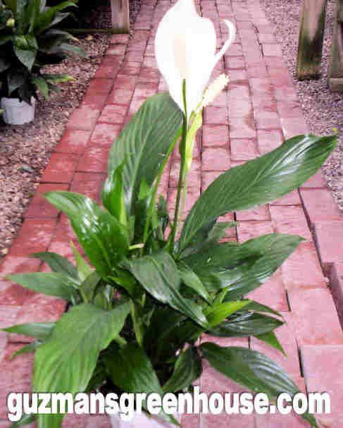 Best Air Purifier Plants