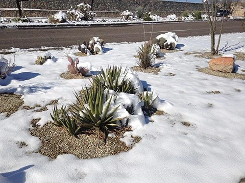 February Gardening Tips for the desert Southwest