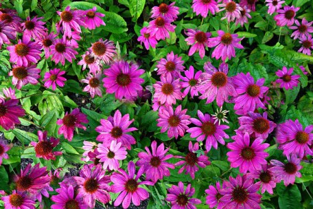 Great flowering color for spring