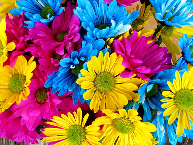 Great flowering color for spring plants guzmansgreenhouse daisies for color in containers or in flowering beds cosmos mightylinksfo