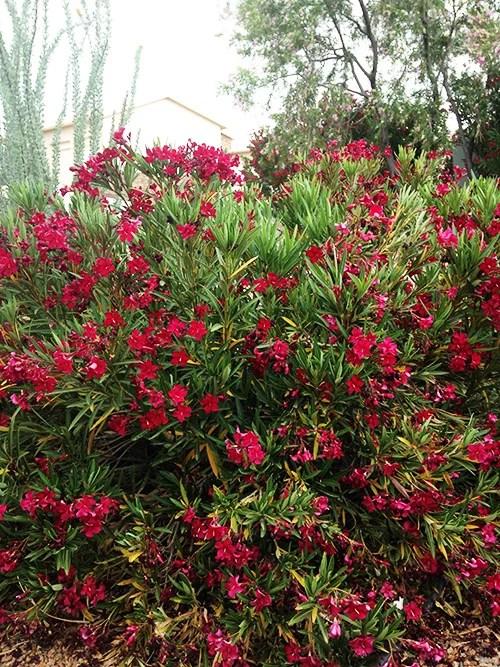 Easy care southwest landscaping plants for Easy care landscape plants