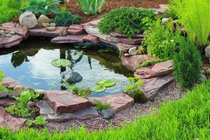 Types of landscape design