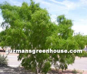 Xeriscape landscaping ideas