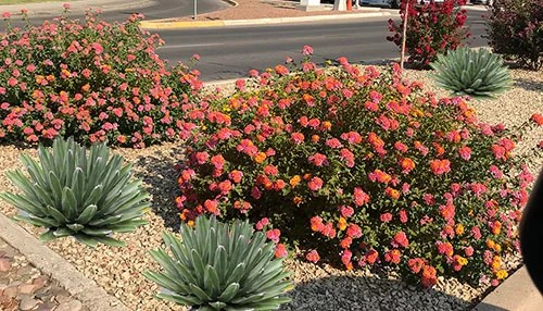 Small Desert Plants: Desert landscape ideas for backyards