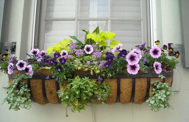 flowering-window-box-image