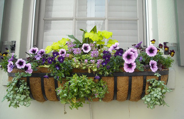& Choosing the Best Flowers for Your Window Boxes