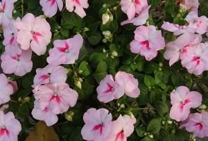 List Shade Loving Plants