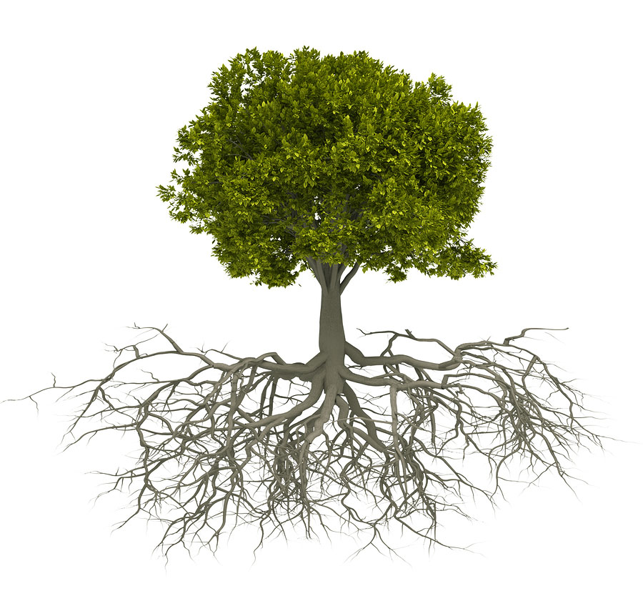 Plant Root Stimulator