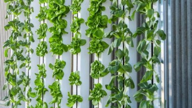 How to Create a Hanging Garden