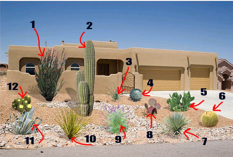 Desert Plants Names and Pictures