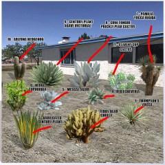 desert-landscape-plants4