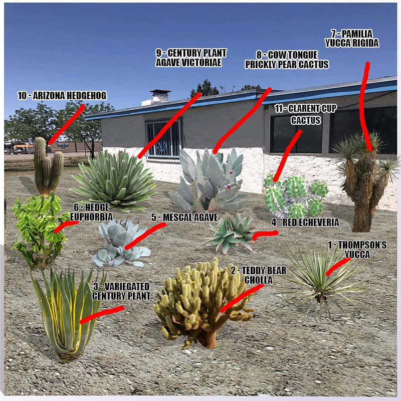 Low Maintenance Landscaping Ideas For A Stress Free 2018: Desert Plants Names And Pictures