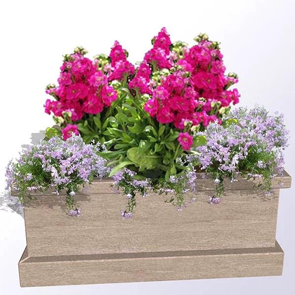 Garden stock plants