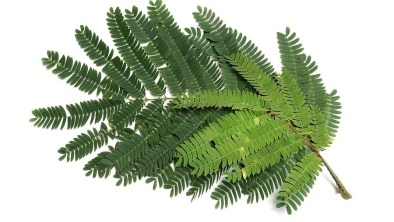 Identify trees by leaves