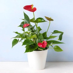 Colorful Leaves for Indoor Decoration