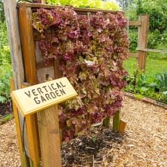 3 tips for garden safety