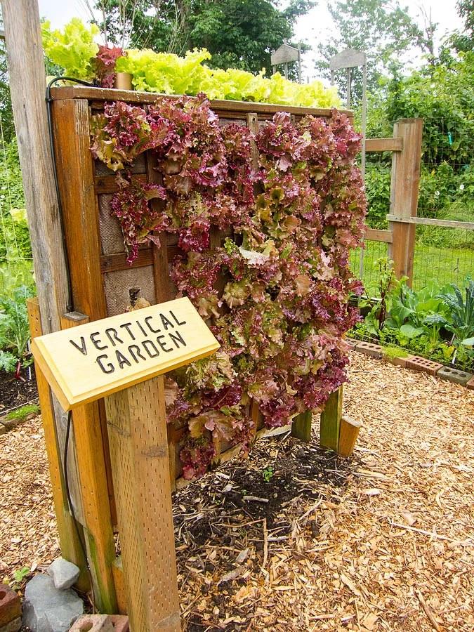 3 Tips To Improve Garden Safety For Seniors