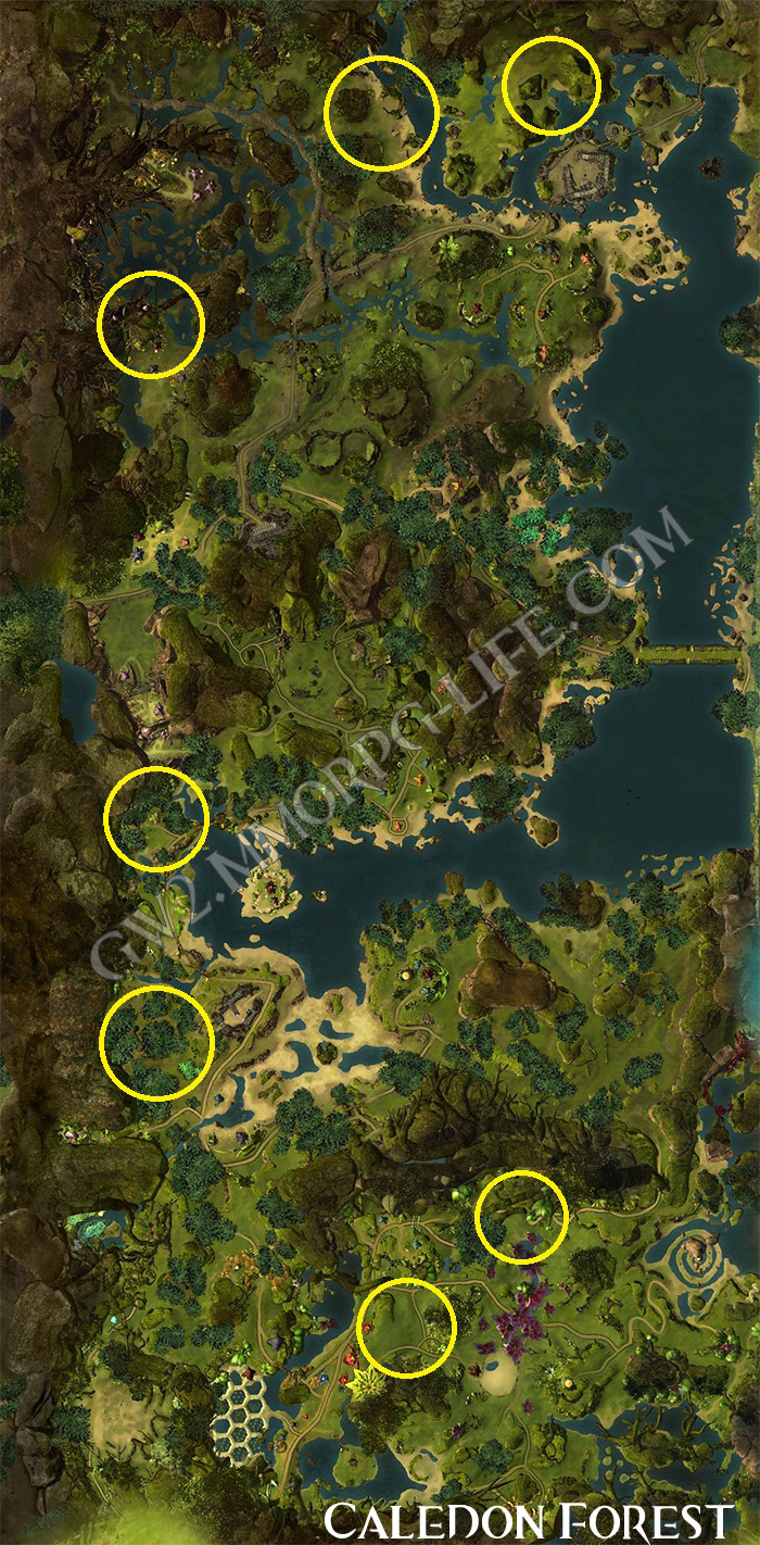 Gw2 Path Of Fire Mastery Points : mastery, points, Onions_Caledon_Forest, Guild