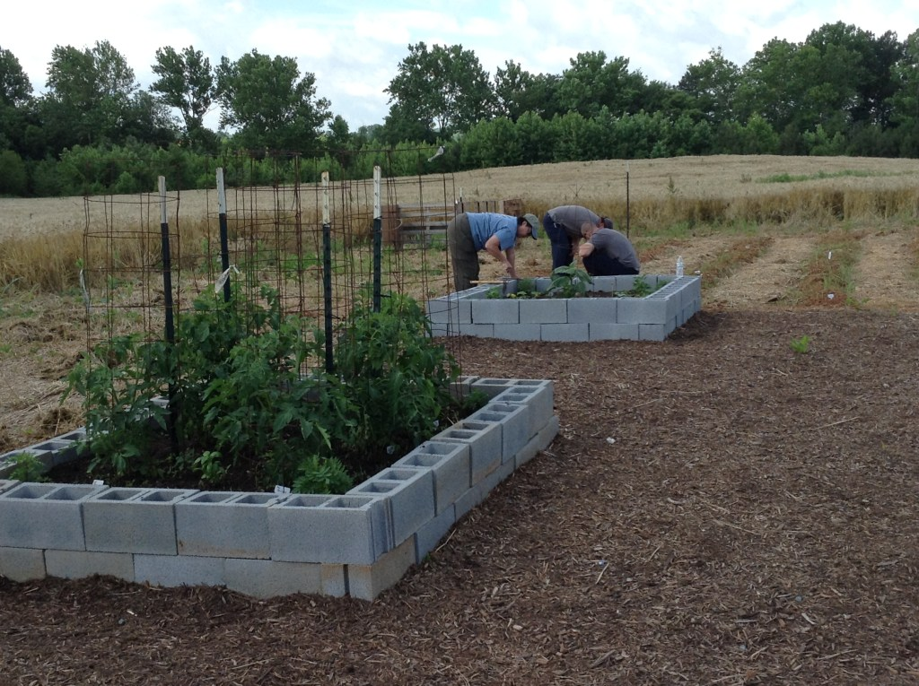 Progress at the Rapidan River Master Gardener's demonstration garden at Carver.