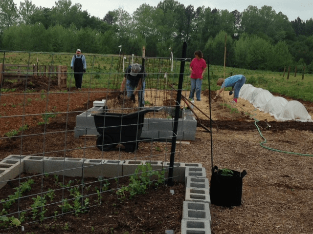 Rapidan River Master Gardeners maintain their Demonstration Garden at The Carver Center. Foreground - vertical gardening trellis reduces back bending work, background - row covers improve growing conditions for vegetables.
