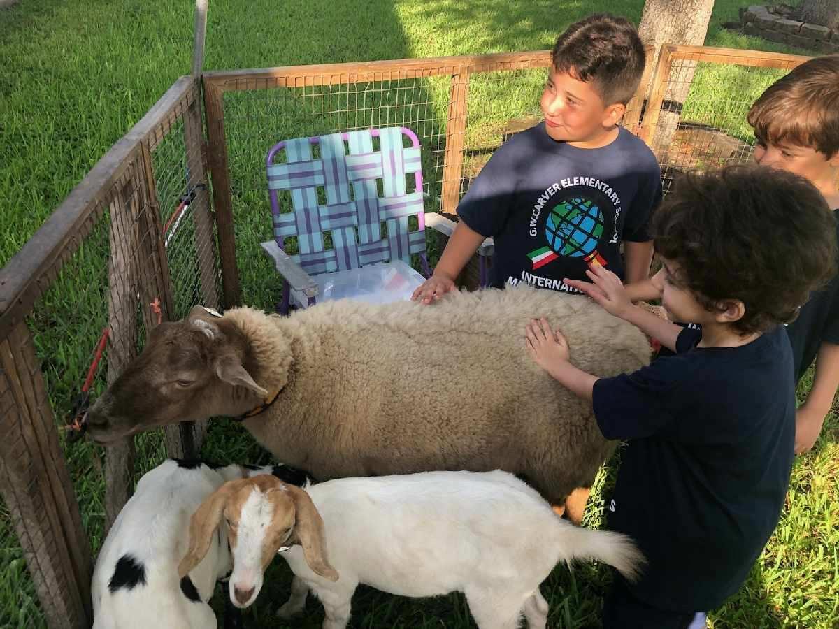 The Little Farm visits Little Carver Image