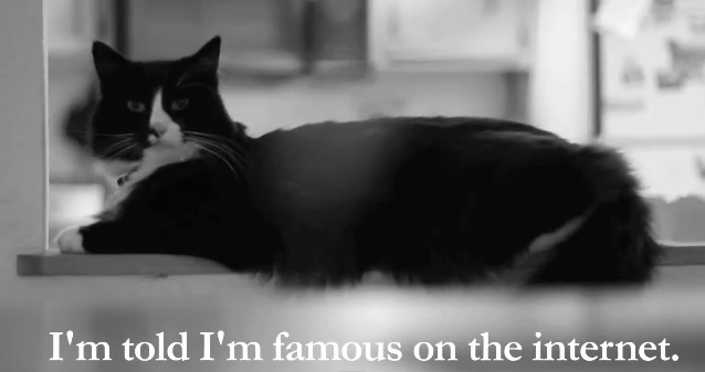 gwendalperrin.net henri le chat noir famous internet