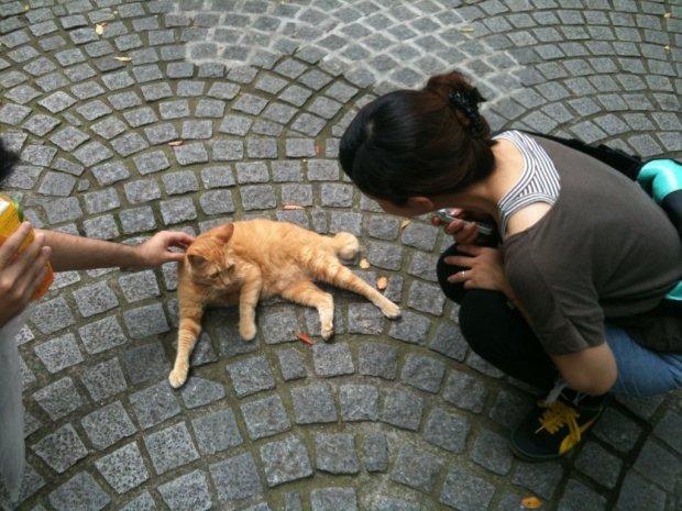 gwendalperrin.net ainoshima cat 1