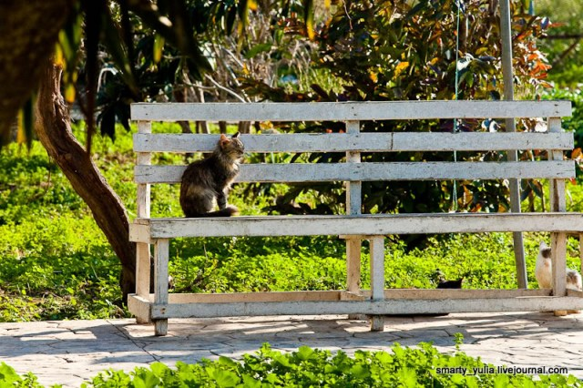 gwendalperrin.net akrotiri chat cyprus cat nicolas 3