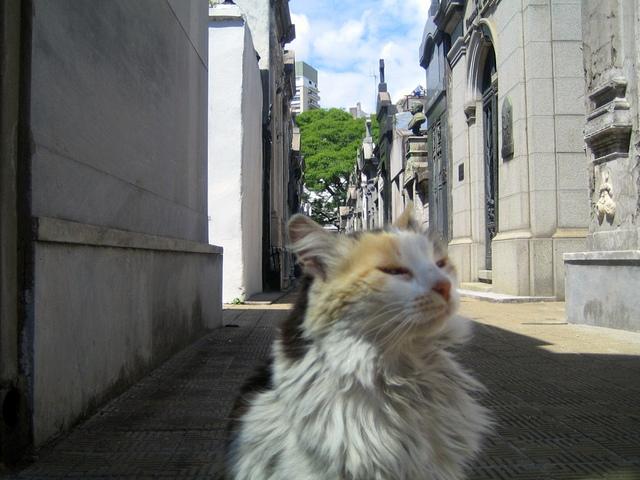 gwendalperrin.net cementerio de la recoleta lobby félin argentine (3)