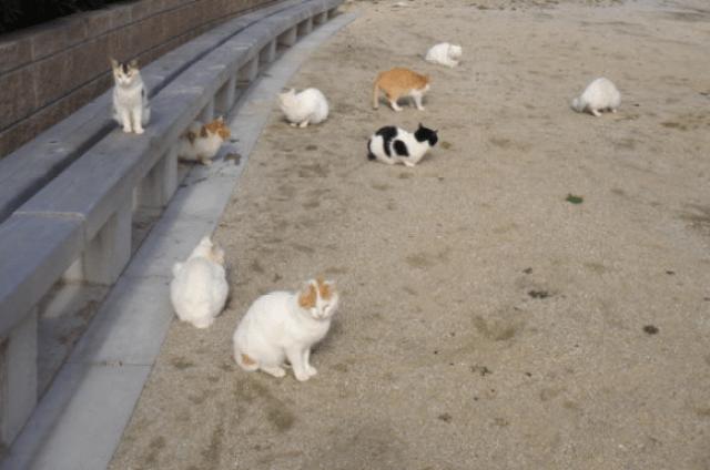 gwendalperrin.net japon cat lobby félin genkaishima