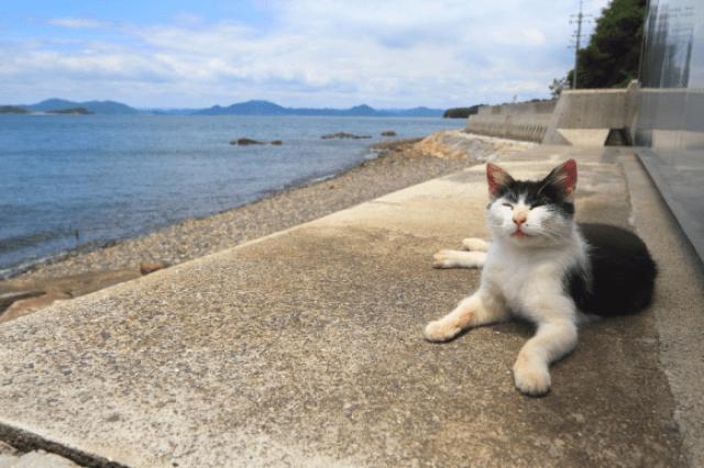 gwendalperrin.net japon cat lobby félin manabeshima