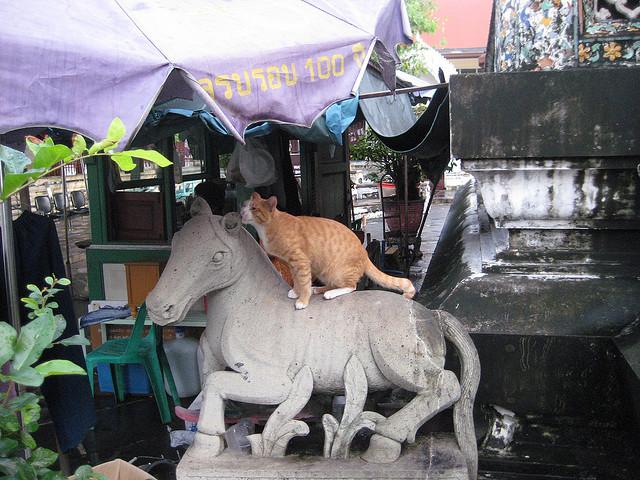 gwendalperrin.net lobby félin thaïlande wat arun (1)