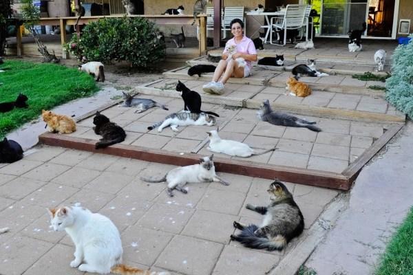 Cat House of the Kings : cette femme a hébergé 24 000 chats abandonnés depuis 1992 dans sa maison