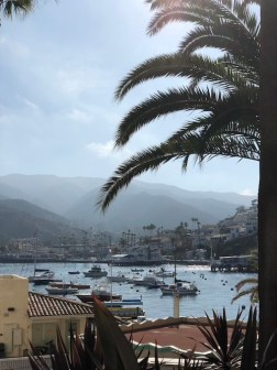 mountains and boats on an ocean harbor framed by a palm tree