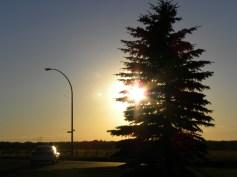 Yellow star-like sunset