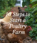 10 Steps to Start a Poultry Farm