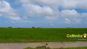 Picture of swamp land in New Amsterdam Berbice.