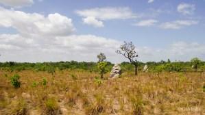 Ant nest in the savannah...